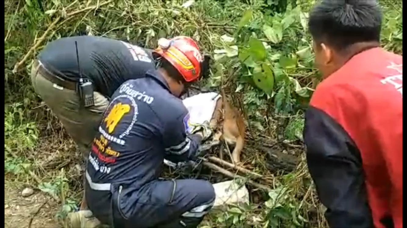 (มีคลิป) ใจร้ายทำบ่วงดักสัตว์ติดสุนัข กู้ภัยพัทยาช่วยเหลือปลอดภัย